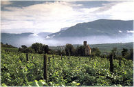 Trentino_vineyards